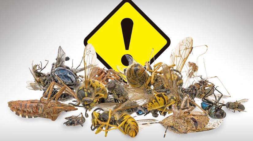 Foto Alerta por el declive de poblaciones de insectos, SDSN México